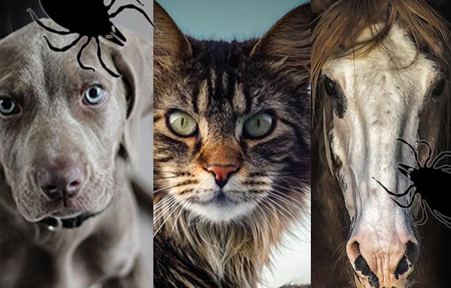 Chat chien et cheval