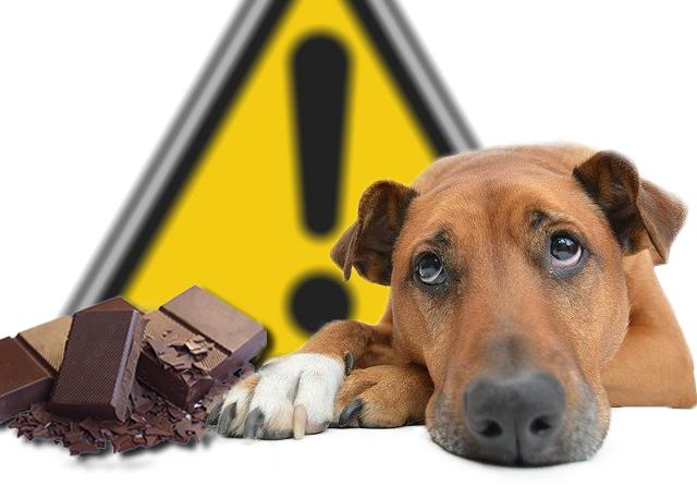 Chocolat danger