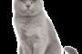Veterinaire tournelles tarifs chats