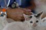 Visite annuelle de santé du chat