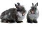 Le comportement du lapin